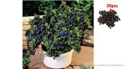 Buy Indoor / Outdoor Bonsai Plant Blueberry Seeds (30-Pack) Blueberry, 30-Pack for $1.25 in Fasttech store