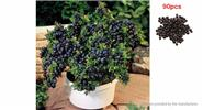 Buy Indoor / Outdoor Bonsai Plant Blueberry Seeds (90-Pack), Blueberry, 90-Pack for $2.79 in Fasttech store
