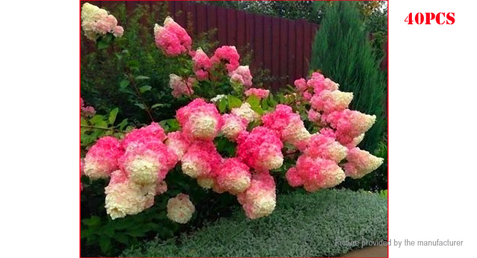 Red Hydrangea Flower Seeds Garden Bonsai Potted Blooming Plant (40-Pack)