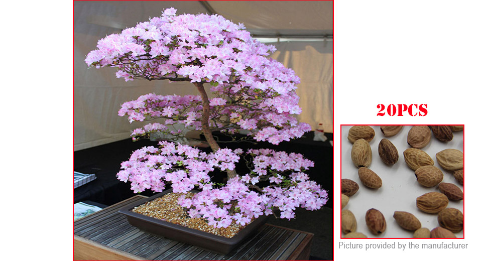 Japanese Sakura Seeds Cherry Blossom Bonsai Potted Sakura Tree (20-Pack)