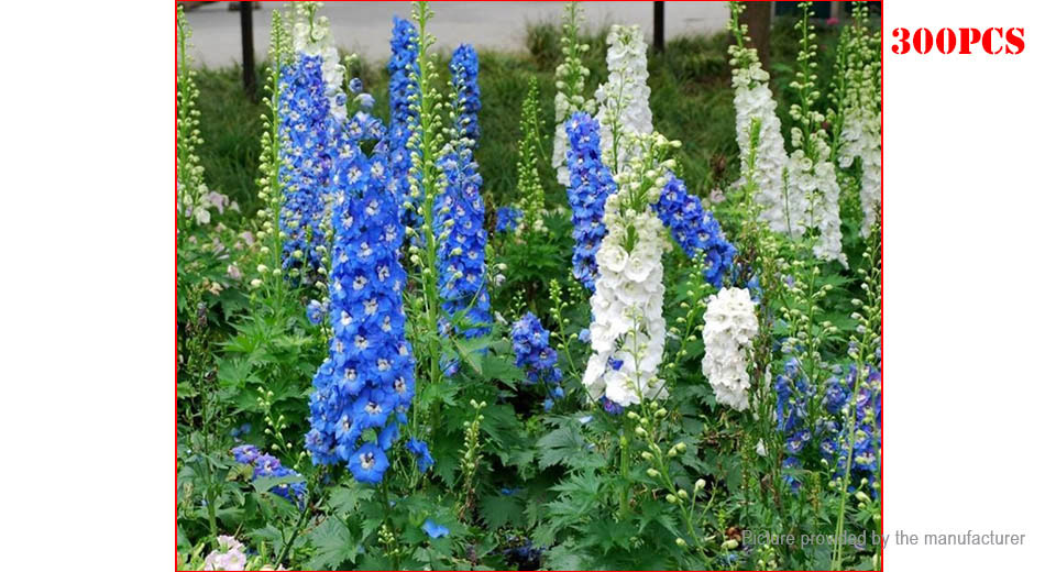 Egrow Delphinium Grandiflorum Flower Seeds Garden Decor (300-Pack)