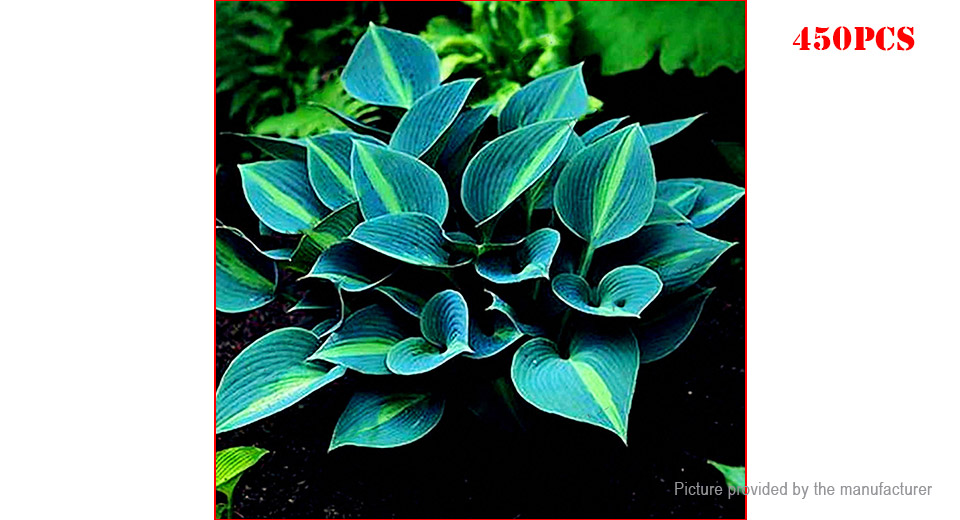 Green Egrow Hosta Flower Seeds Garden Perennial Ornamental Plants (450-Pack)