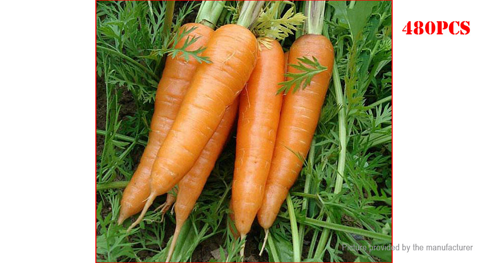 Product Image: carrot-seeds-garden-vegetable-plant-480-pack