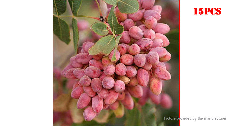 Pistachios Seeds Nut Fruit Tree Outdoor Garden Plant (15-Pack)