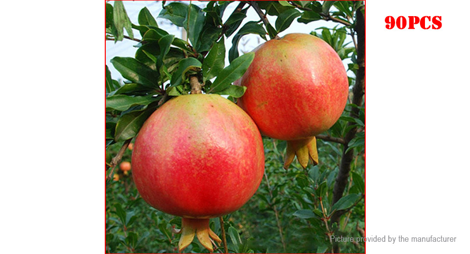 Pomegranate Seeds Sweet Delicious Indoor Mini Bonsai Fruit Tree (90-Pack)