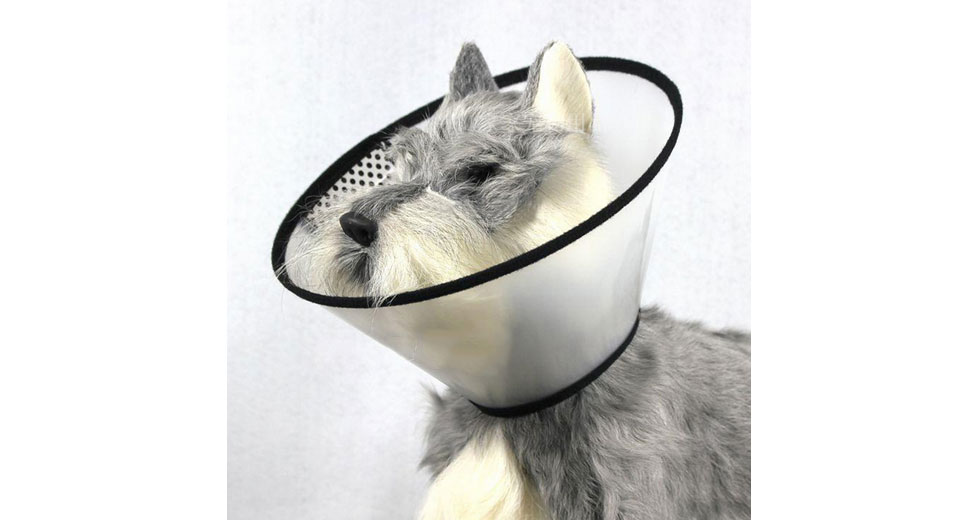 Pet Dog Cat E-Collar Wound Healing Cone Protection Cover