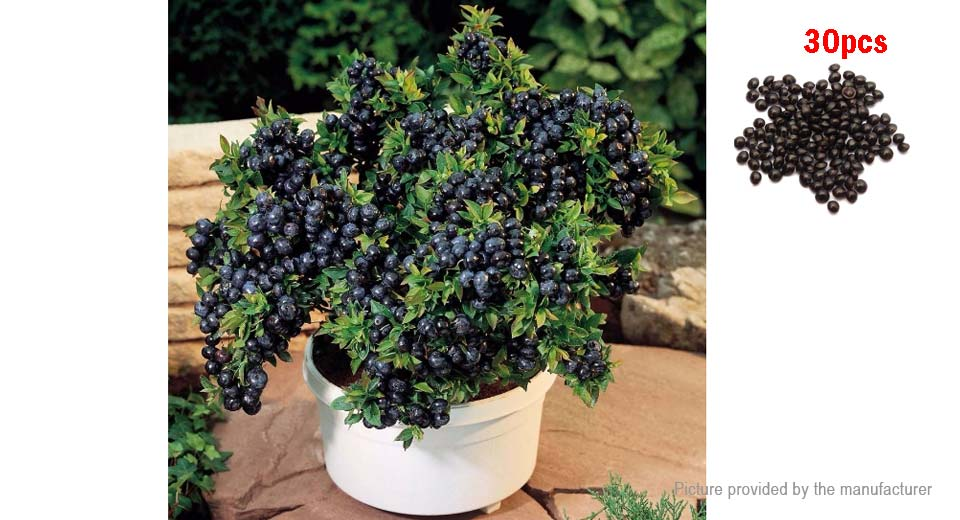 1 02 Free Shipping Indoor Outdoor Bonsai Plant Blueberry Seeds 30 Pack Blueberry 30 Pack At M Fasttech Com Fasttech Mobile