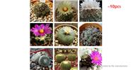 Mixture Cactus Seeds Succulent Flower Seeds (10-Pack)