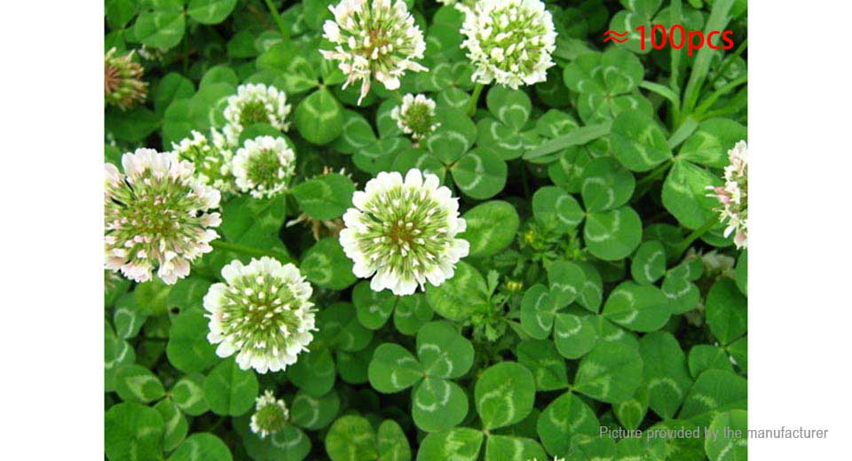 170 four leaf clover lucky plants yellow flower seeds 100 pack four leaf clover lucky plants yellow flower seeds 100 pack mightylinksfo Choice Image