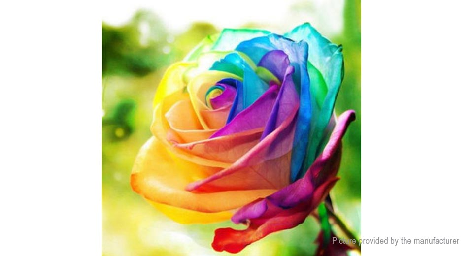 $1.59 Rainbow Rose Seeds Rare Flower Perennial Potted Rose ...