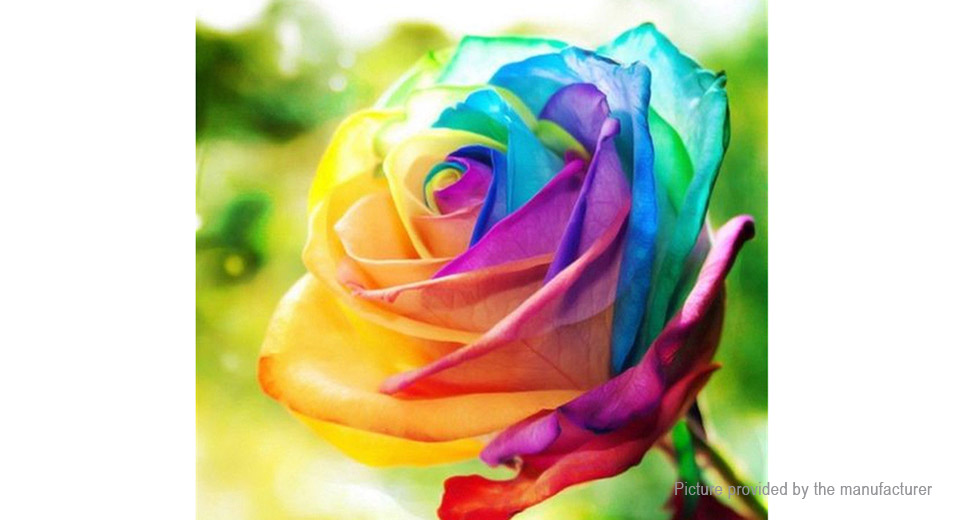 Combination rainbow rose chrysanthemum meteor shower for Growing rainbow roses from seeds