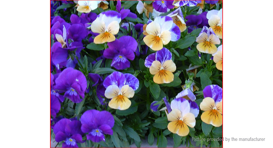 Pansy Seeds Mix Color Wavy Tri Color Flower Seeds Garden Bonsai (500-Pack)