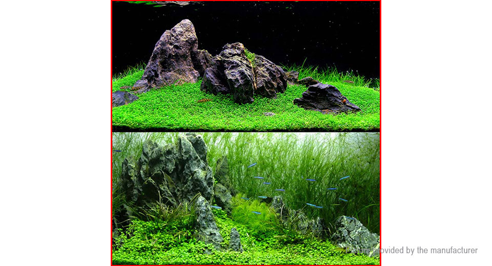 Glossostigma Elatinoides Fish Tank Aquarium Landscape Decoration Seeds