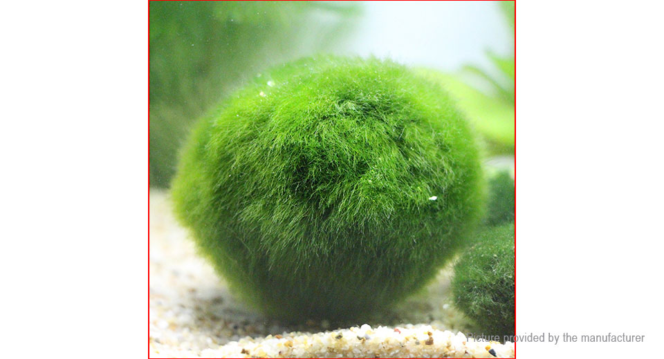3-4cm Cladophora Live Aquarium Plant Fish Tank Ornament