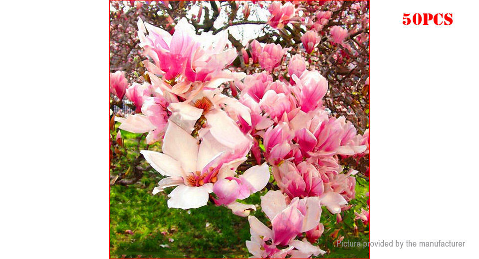 Product Image: pink-egrow-magnolia-seeds-garden-fragrant-tree