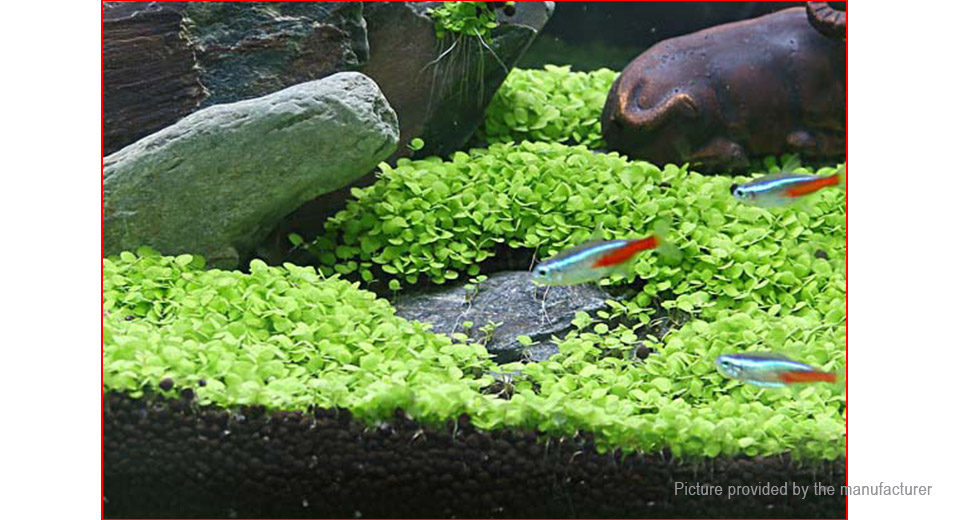 Aquarium Grass Seeds Water Plant Aquatic Fish Tank Decor (3000-Pack)