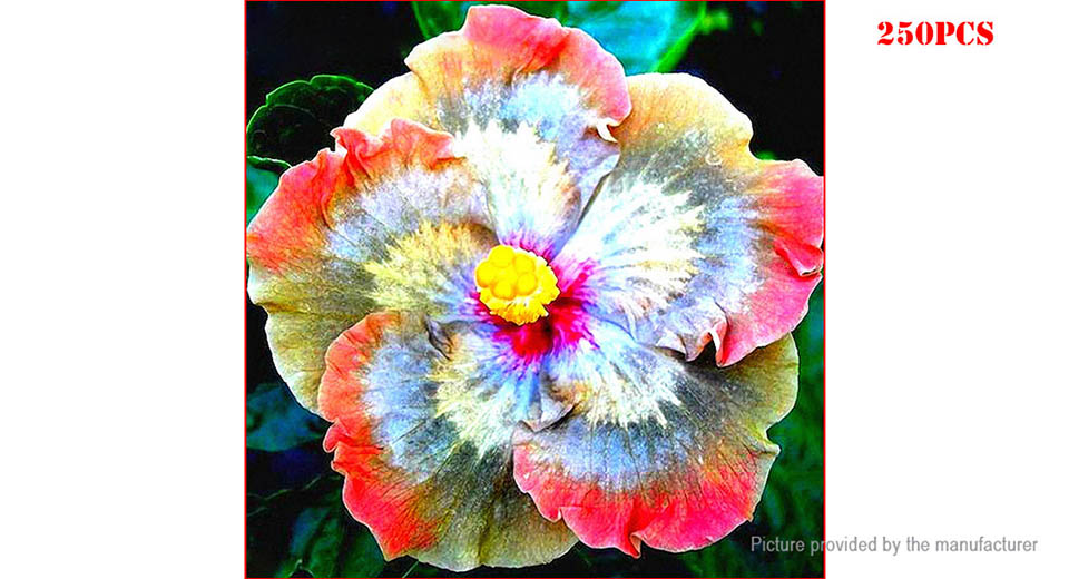 257 Rainbow Egrow Giant Hibiscus Flower Seeds Garden Perennial