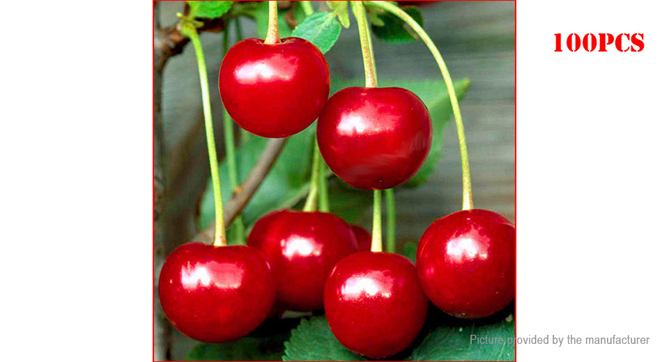 Product Image: dwarf-cherry-seeds-indoor-bonsai-fruit-tree-plant