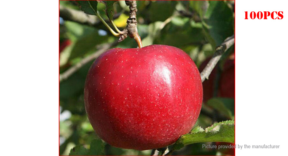 Product Image: red-fleshed-apple-seeds-redlove-apple-fruit-tree