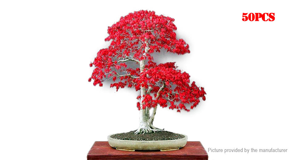 Product Image: japan-red-maple-seeds-garden-diy-bonsai-mini-tree