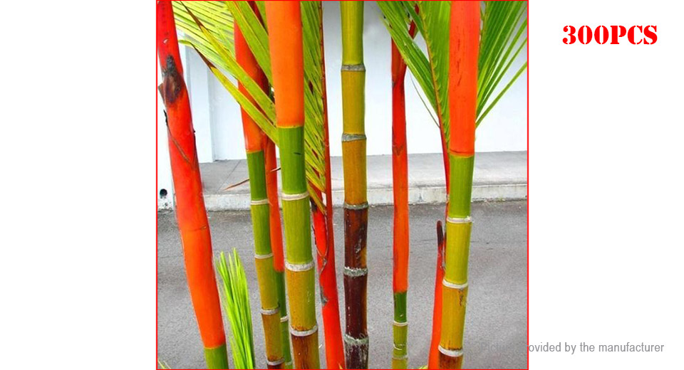 Product Image: colorful-palm-tree-seeds-bonsai-bamboo-seeds-home